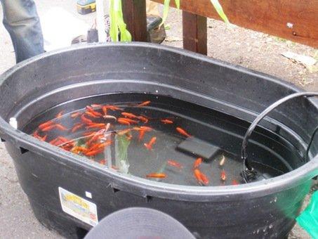 aquaponics demo kijani grows