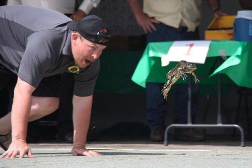 frog jump county fair