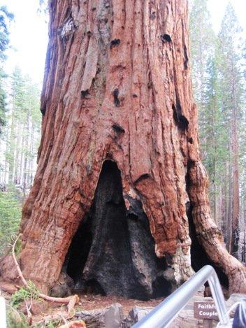 giant sequoias faithful couple bottom