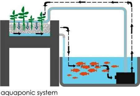kijani grows aquaponics