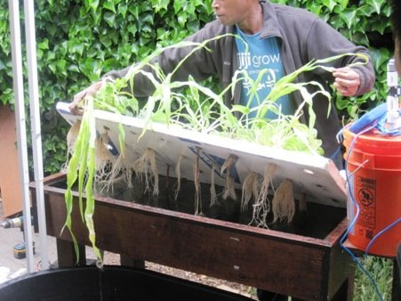kijani grows west oakland