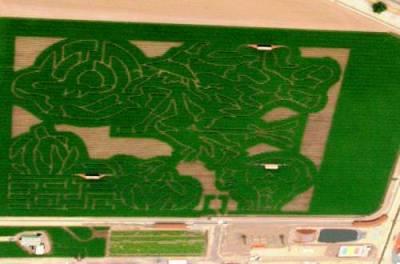 dellosso farms corn maze