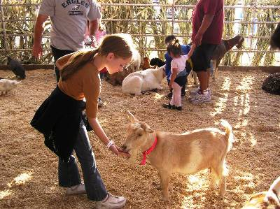 dellosso farms petting zoo