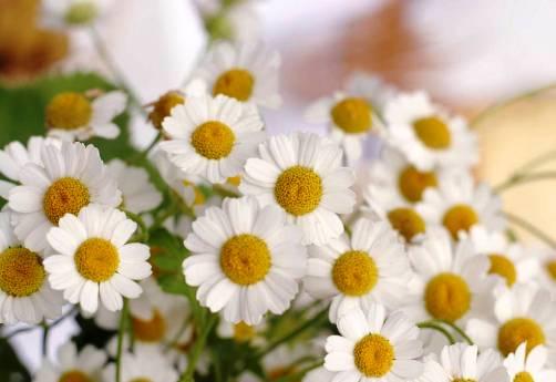 daisy day january 28
