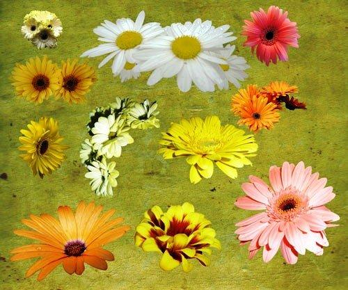 national daisy day
