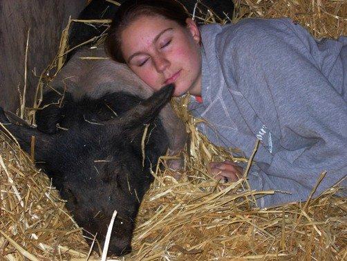 4h swine program
