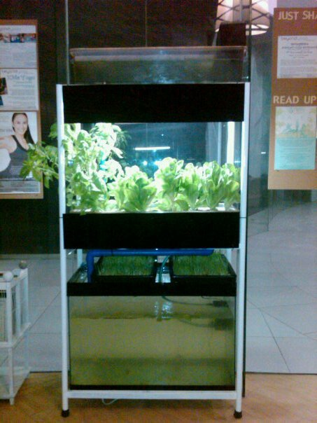 Do It Yourself Home Design: Free DIY Do It Yourself Aquaponics Plans By (MADE) Modular