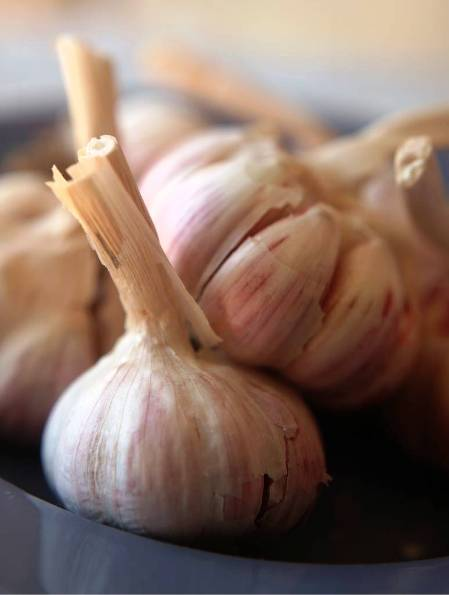 national garlic day recipes