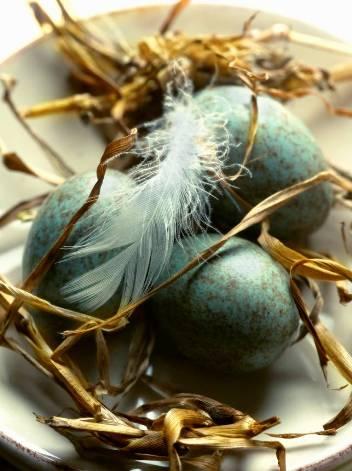 2012 national egg day
