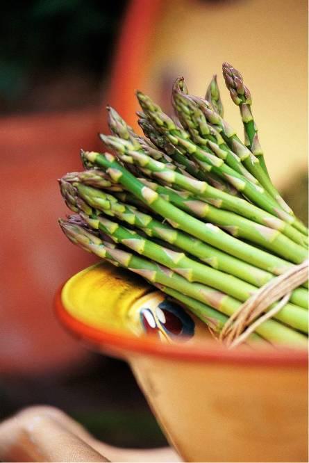 asparagus day