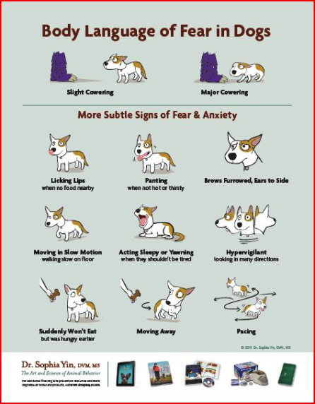 dog fear anxiety poster