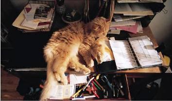 take your pet to work week