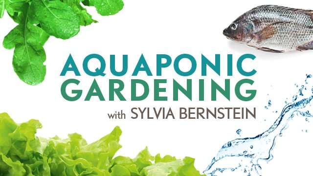Aquaponic Gardening With Sylvia Bernstein Online Course - Growing Fish and Vegetables Together